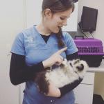 Providence River Animal Hospital
